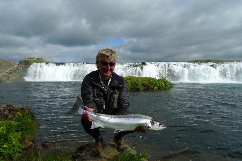 Lebih Hemat Yuk Cari Tahu Harga Ikan Arwana Anakan Disini